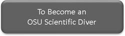 To Become an OSU Scientific Diver