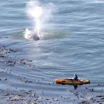 kayaker with whale