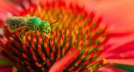 pretty pollinator