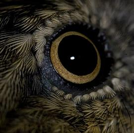 close up of an owl